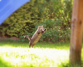 Felix Jumping