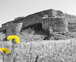Waldeck Schloss with Flower