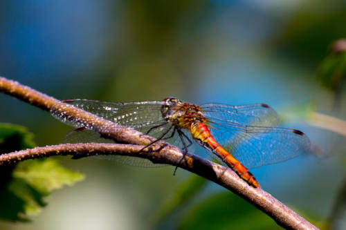 final-dragon-fly