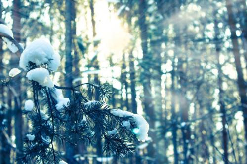 Winter Tree Rays